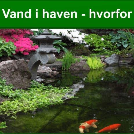 Vand i haven - hvorfor