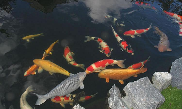 Kuldioxid kommer fra fisk