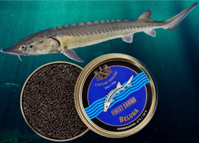 stør Kaviar – det sorte guld