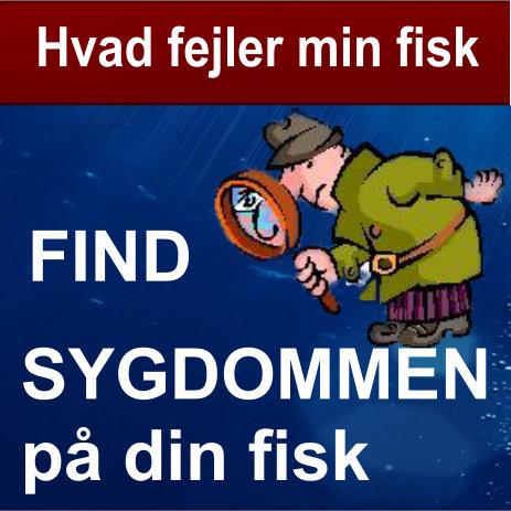 Find sygdommen på din fisk