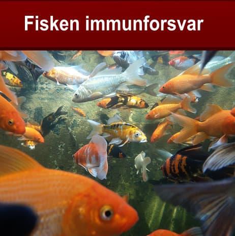 Fisken-immunforsvar