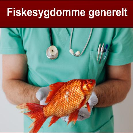 Fiskesygdomme generelt