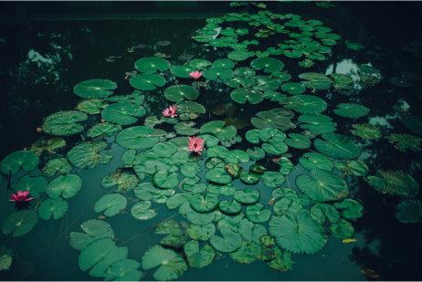 flydeplanter til havedammen gennerelt