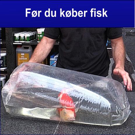 Før du køber fisk