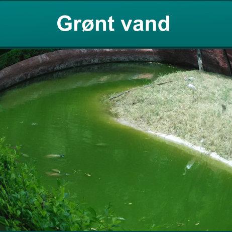 Grønt vand i havedam