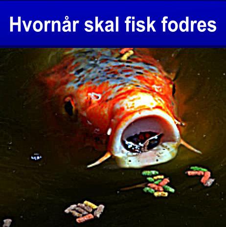 Fiske fodres med fiskefoder