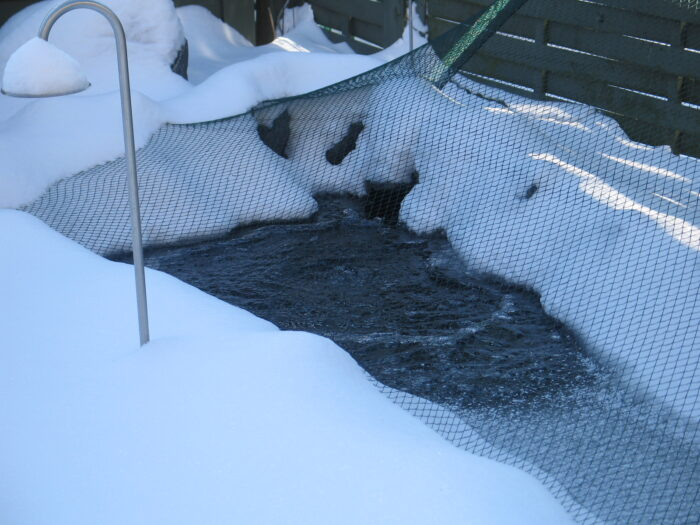 Vintersikring af havedam før sne og is kommer