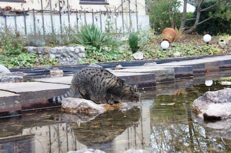 Kat ved havedam