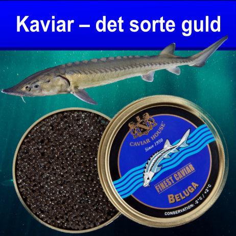 Kaviar – det sorte guld