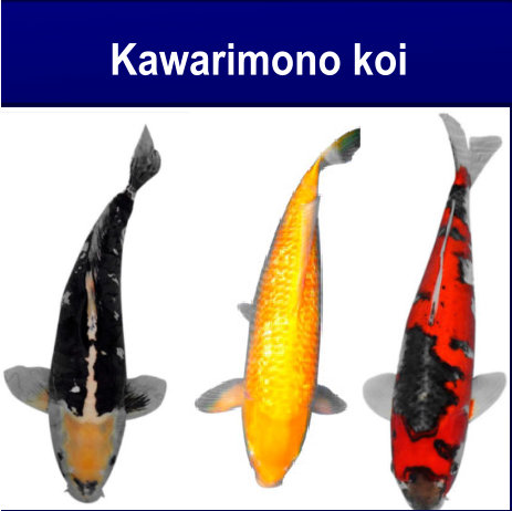 Kawarimono