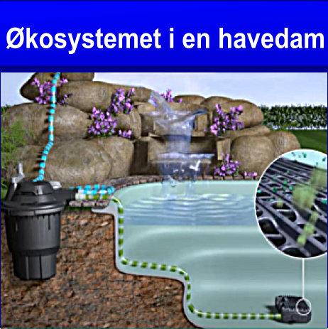 Økosystemet i en havedam