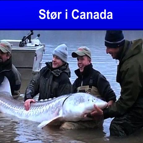 STØR I CANADA