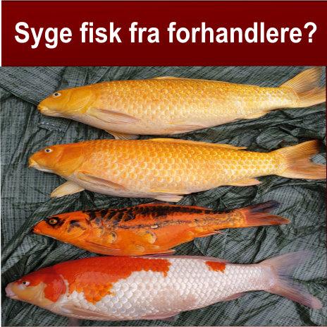 Syge fisk fra forhandlere?