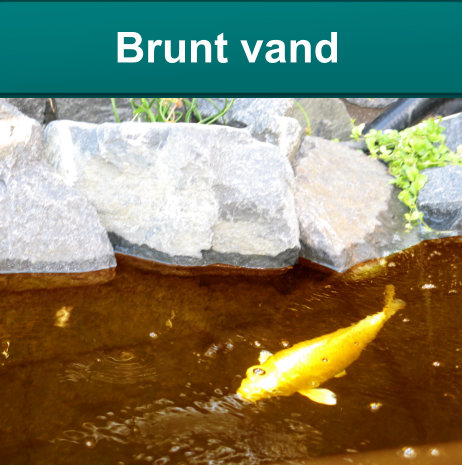 brunt vand i havedam