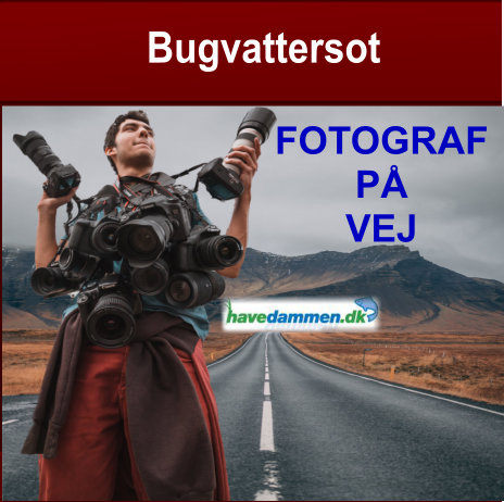 bugvattersot