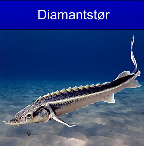 Diamantstør