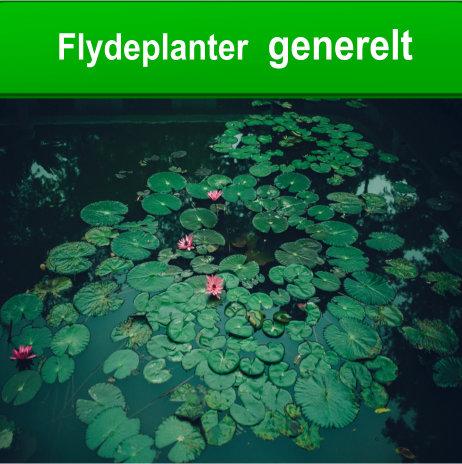 flydeplanter i havedammen