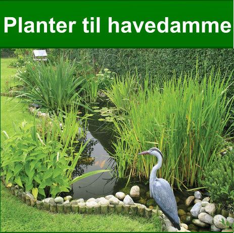 planter til havedammen