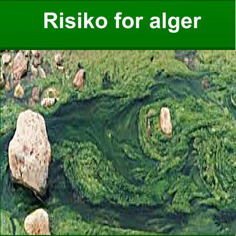 Riskiko for alger