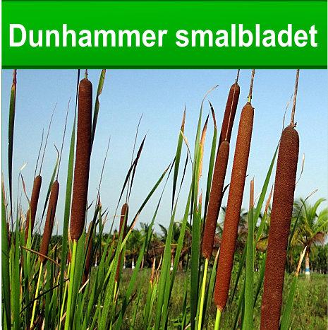 Dunhamer smalbladet til havedammen